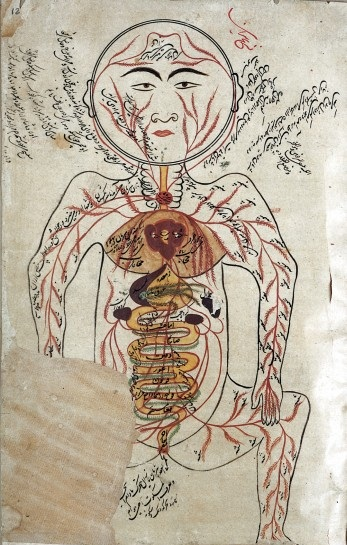 L0008560 Arteries and Viscera (according to Avicenna),