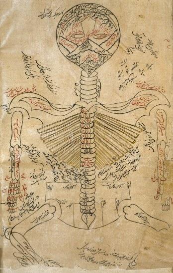 L0013314 Skeleton system., Avicenna, Canon of Medicine