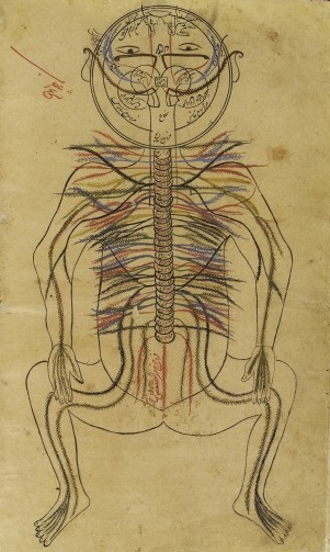 L0013312 Nervous system, Avicenna, Canon of Medicine