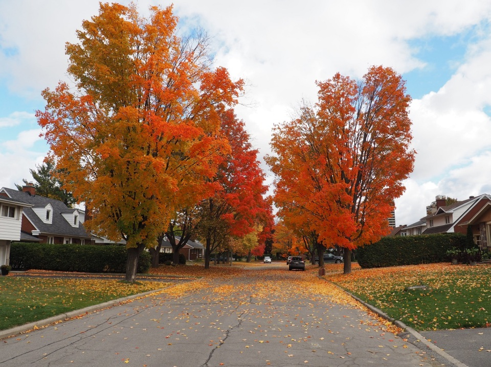 Ottawa street with some delightful autumn foliage