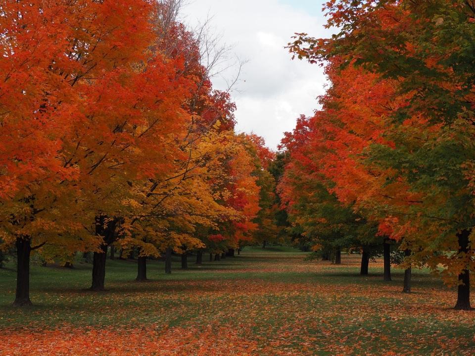 Jacques Cartier Park, Gatineau