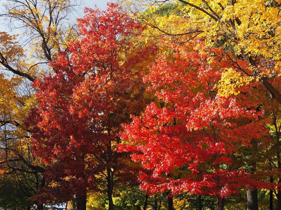 Rideau Hall 2015 Autumn Foliage