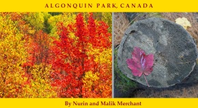 Algonquin Park Canada Fall Colours 2019, Simergphotos, Nurin and Malik Merrchant