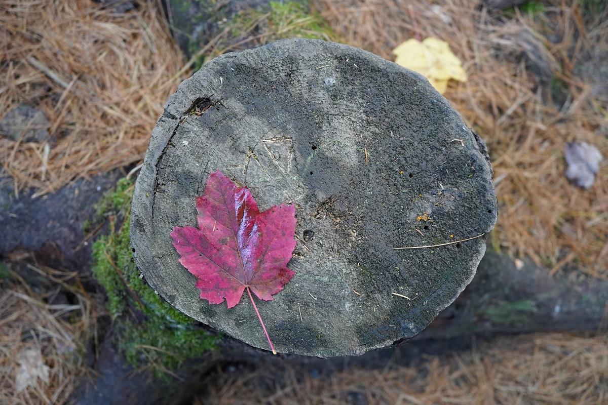 Beaver Pond Trail, Algonquin Park, Ontario, Canada, Autumn 2019