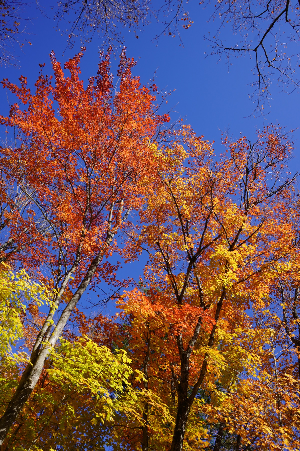 Algonquin Park, Ontario, Canada, Autumn 2019, Foliage Simergphotos