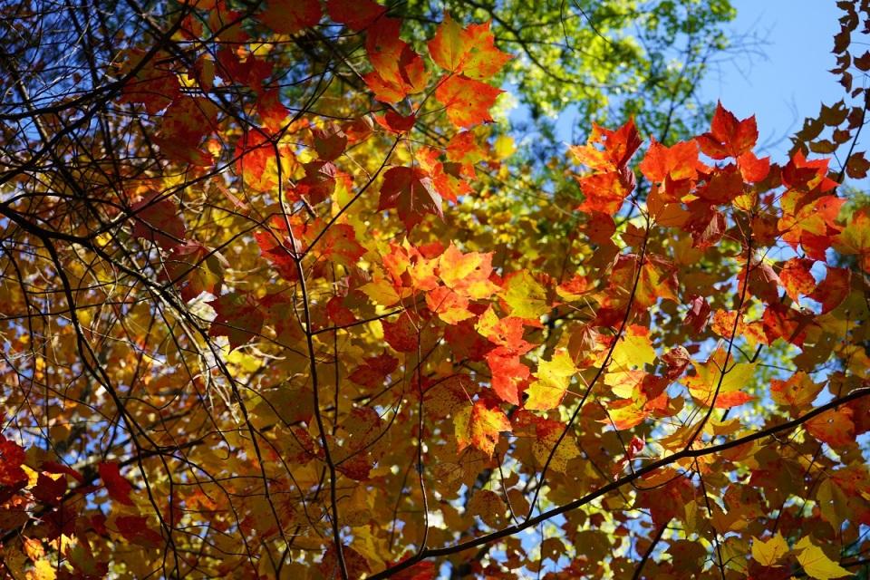 Spruce Bog Boardwalk, Algonquin Park, Ontario, Canada, Autumn 2019