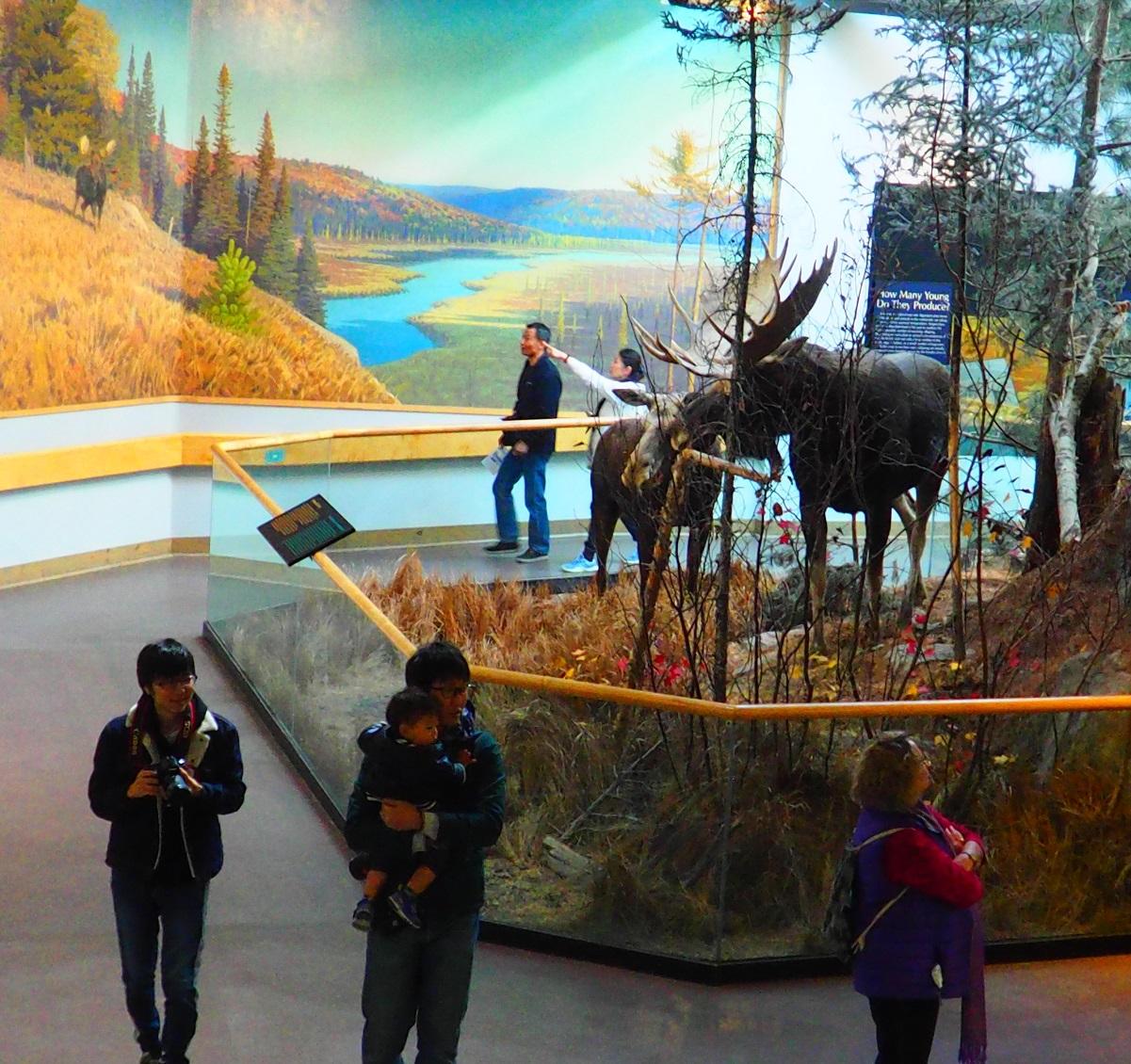 Visitor Centre, Algonquin Park, Ontario, Canada, Autumn 2019