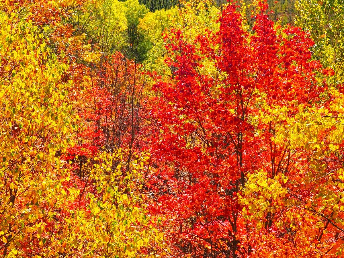 Algonquin Park, Ontario, Canada, Autumn 2019