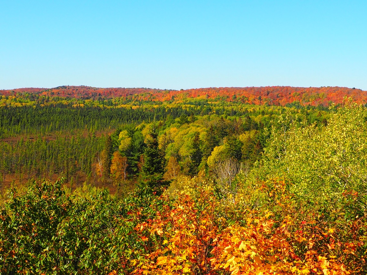 Algonquin Park Fall Colours, Ontario, Canada, Autumn 2019