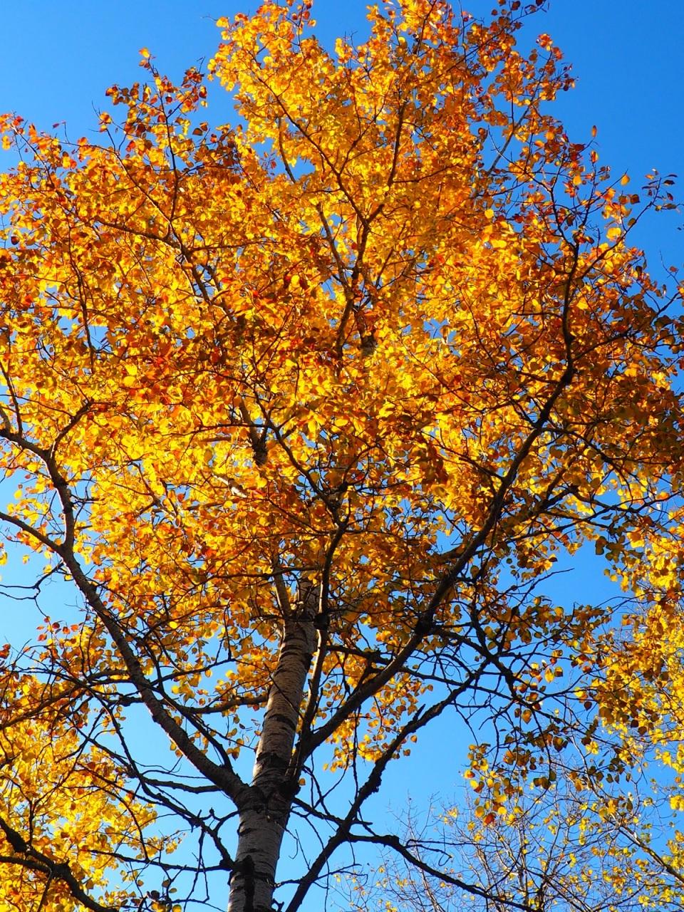 Spruce Bog Boardwalk Algonquin Park, Ontario, Simergphotos, Canada, Autumn 2019