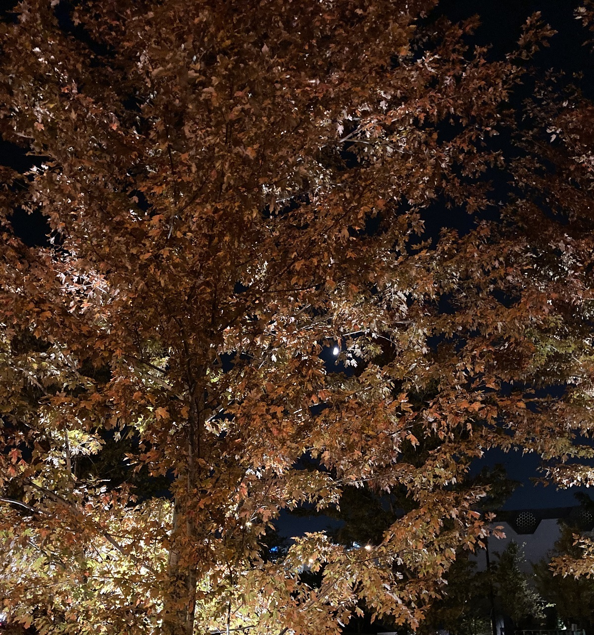 Waxing moon Aga Khan Park autumn colours