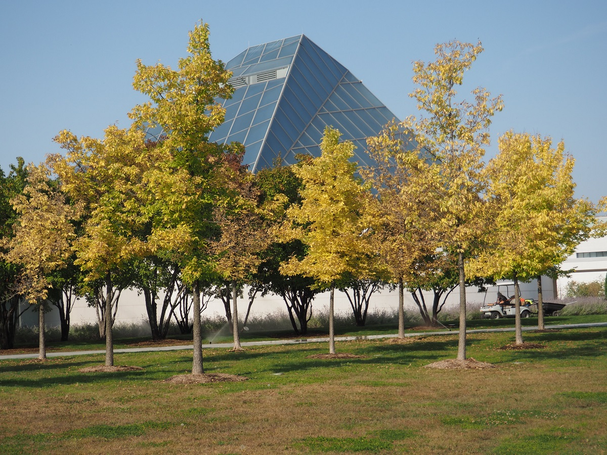 Jamatkhana dome, Aga Khan Park and Fall colours