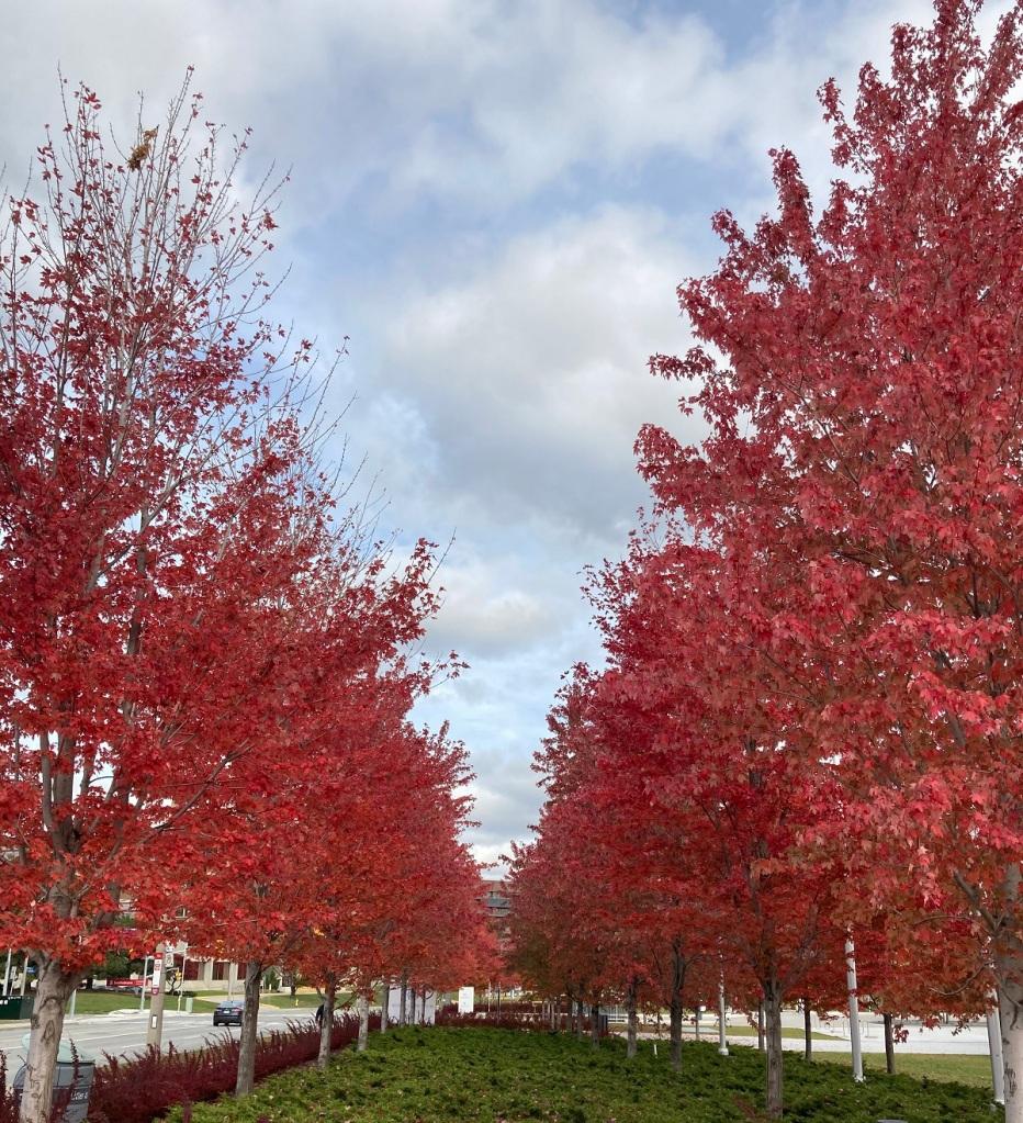 Aga Khan Park Toronto, autumn 2020