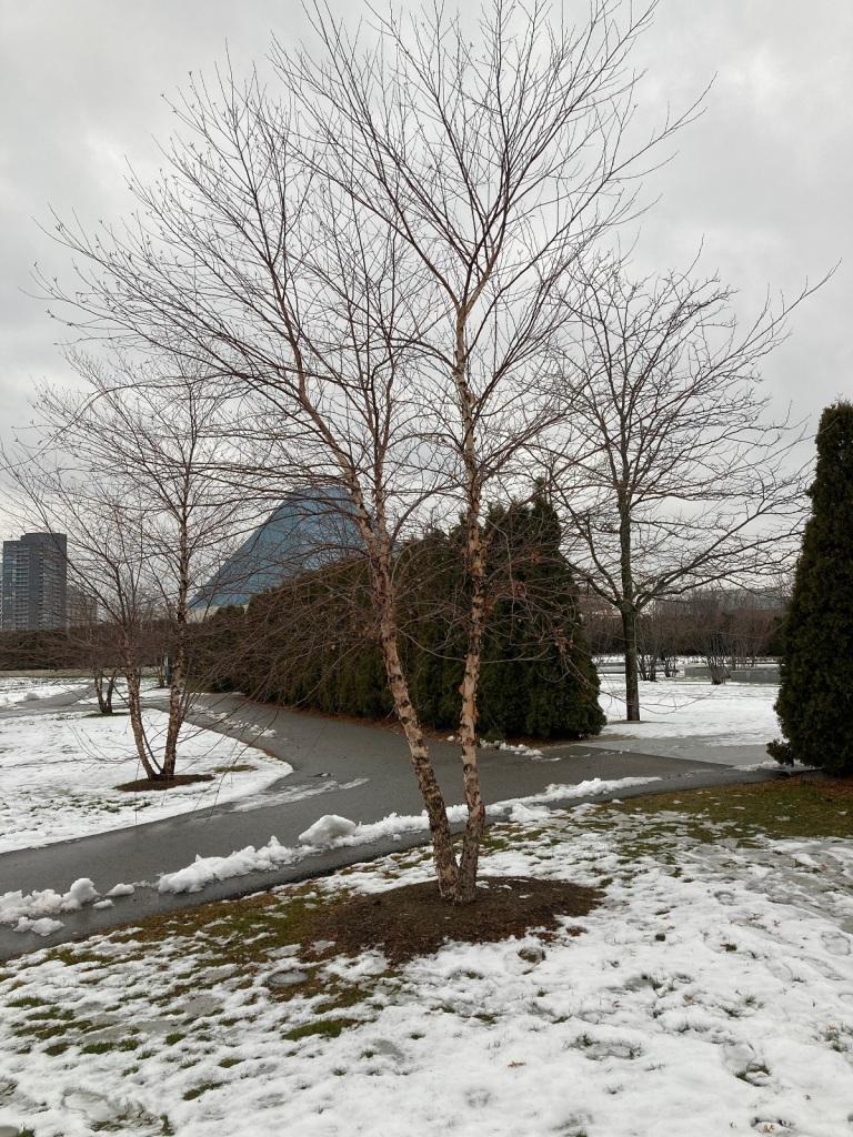 Aga Khan Park after rain in winter