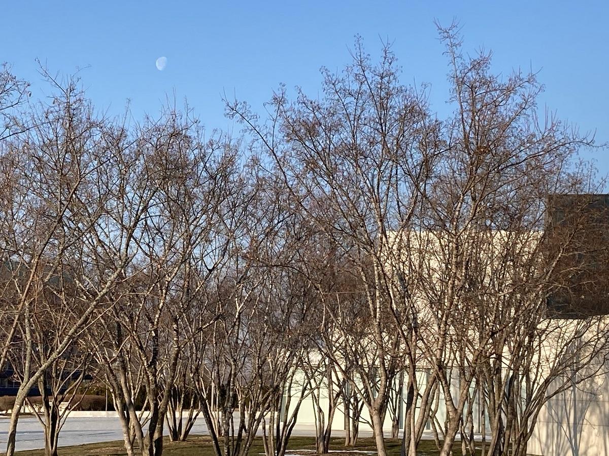 Daytime Moon Aga Khan Park and Ismaili Centre