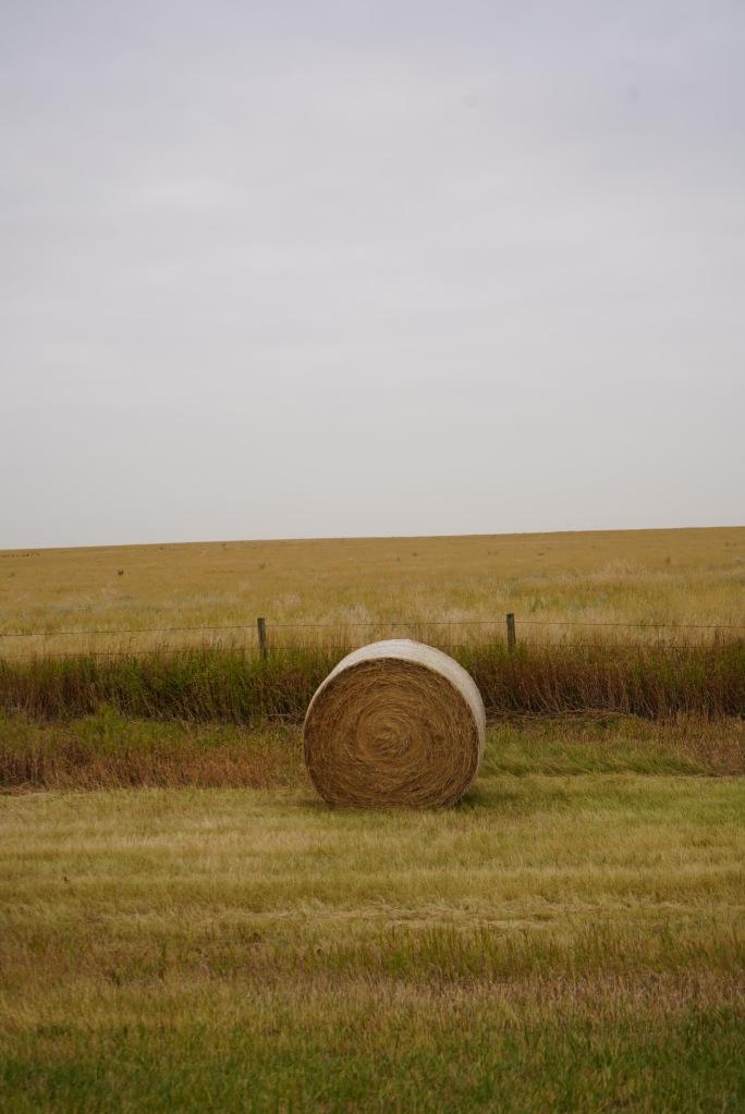 A bale of hay in the Prairies. September 2020. Photo: Nurin Merchant  Simergphotos.
