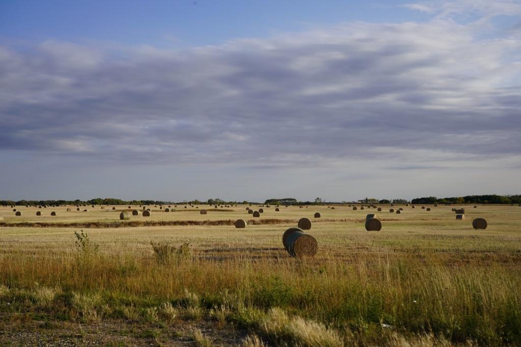 Prairies hay Nurin Merchant Simergphotos