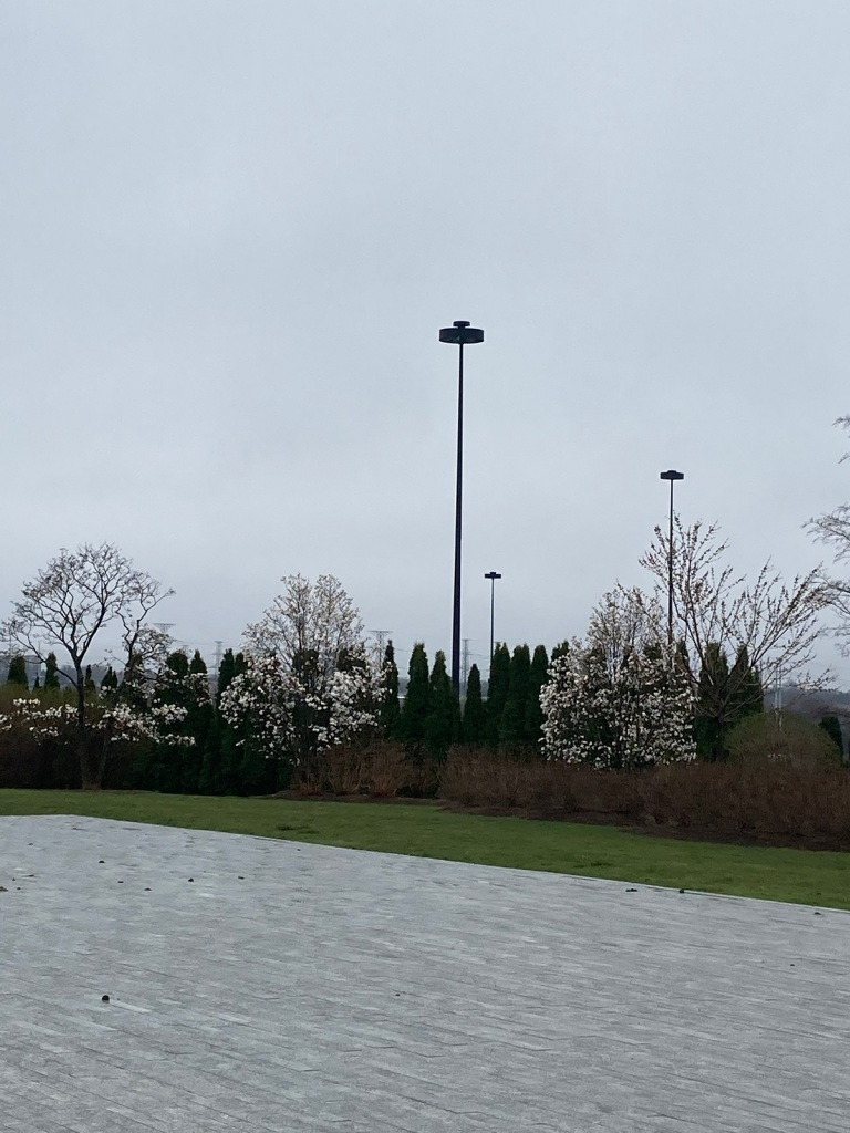 Magnolia trees 048, 049, 050 at Aga Khan Park, Simergphotos, Malik Merchant