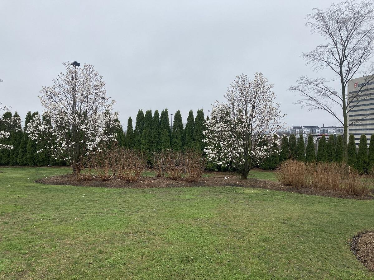 Trees 049, 050 and 051 at Aga Khan Park, S