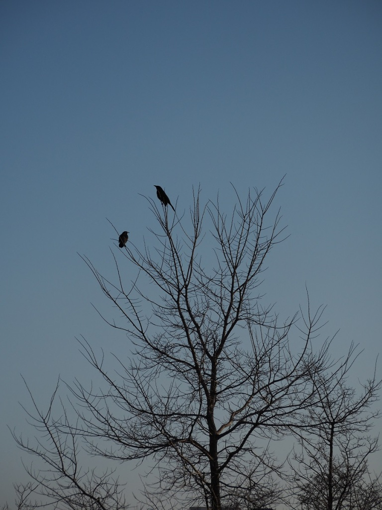 Birds perch at Aga Khan park Tree