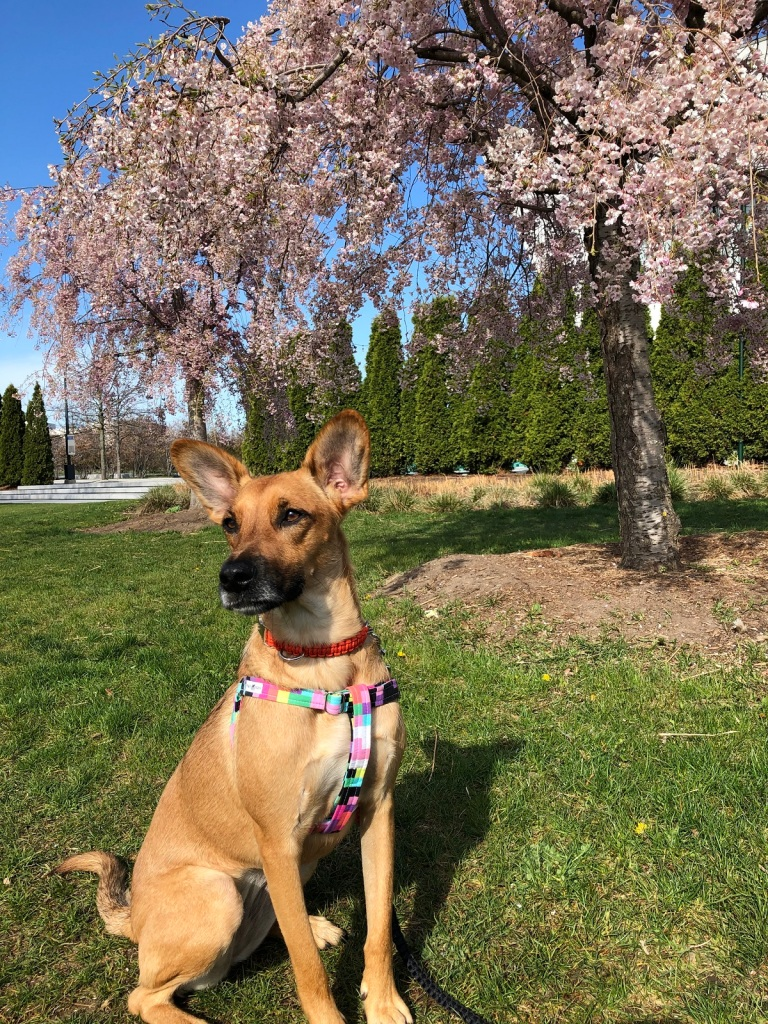 weeping cherry a dog named Circe