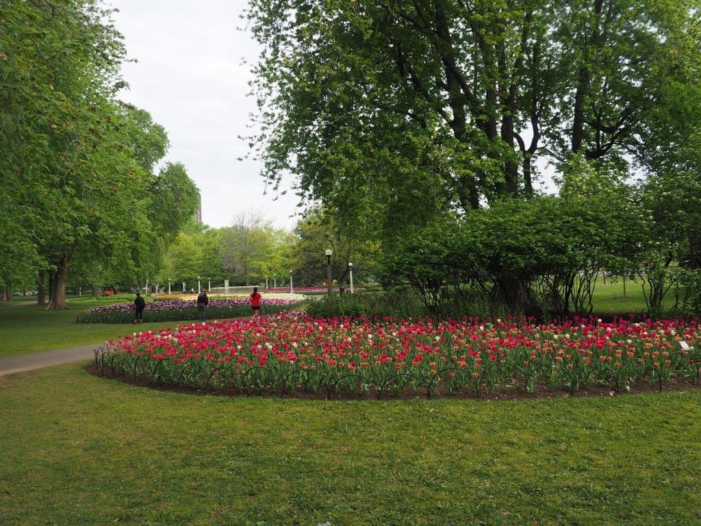 tulips Dows Lake Ottawa Simerg Simergphotos