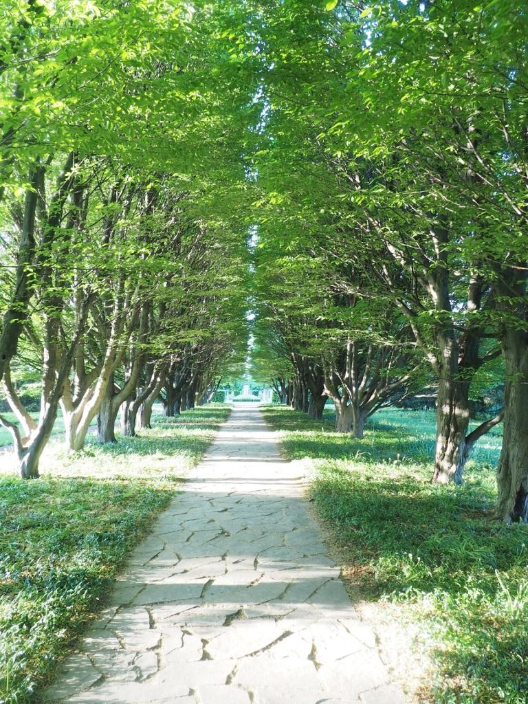 Niagara Parks Botanical Gardens Boulevard of Trees Photo of the Day