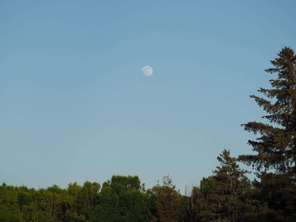 Full Moon Niagara Botanical Gardens, Malik Merchant Simerg SimergPhotos, Photo of the Day