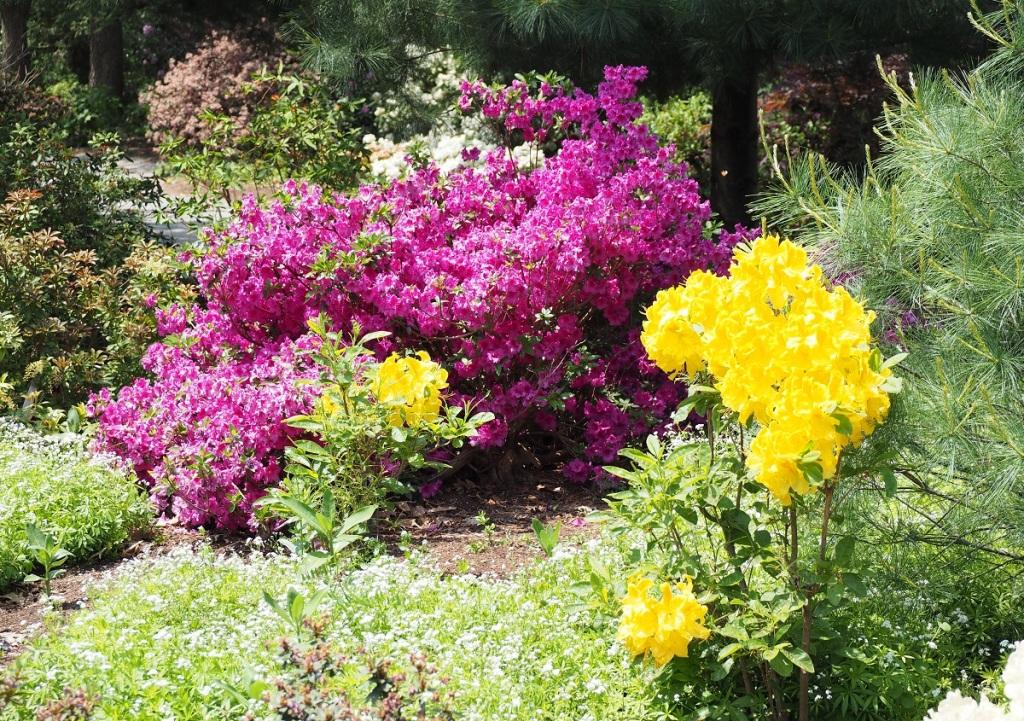Niagara Parks Botanical Gardens Photo of the Day