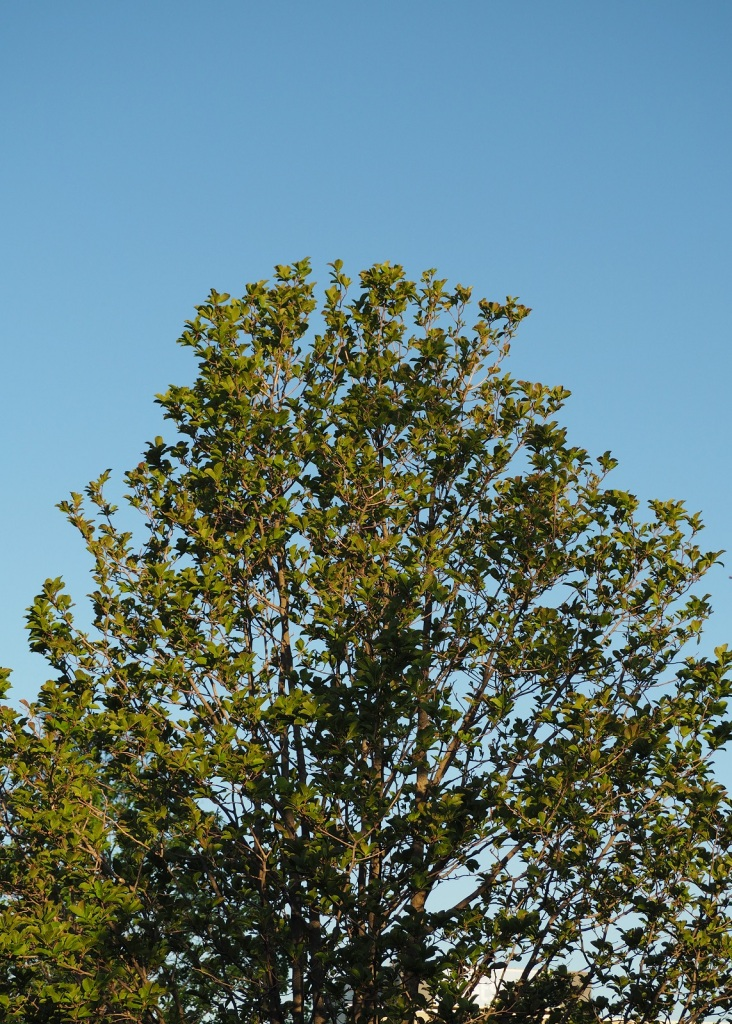 Tree #049, Aga Khan Park. May 26, 2021. Photo: © Malik Merchant Simergphotos.