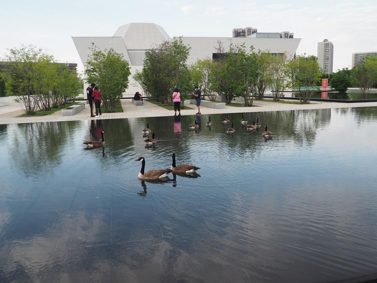 Aga Khan Park pond, Canadian geese
