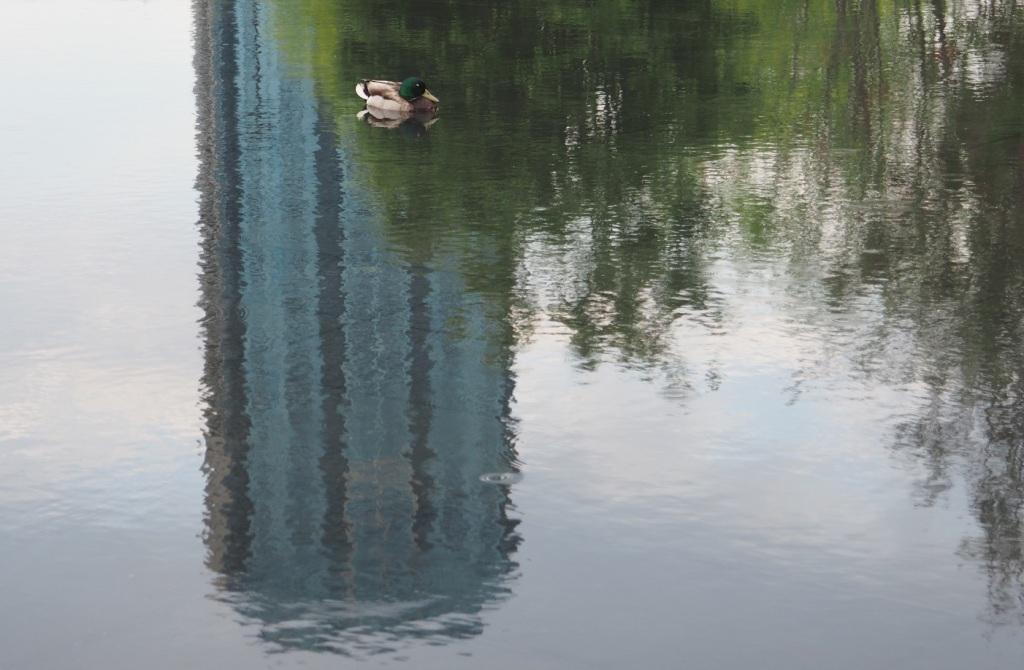 Aga Khan Park Ponds