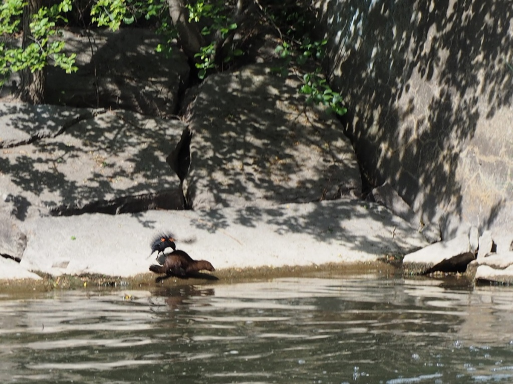 East Don Trail and Edwards Gardens, Simergphotos, Malik Merchant, Photo of the Day