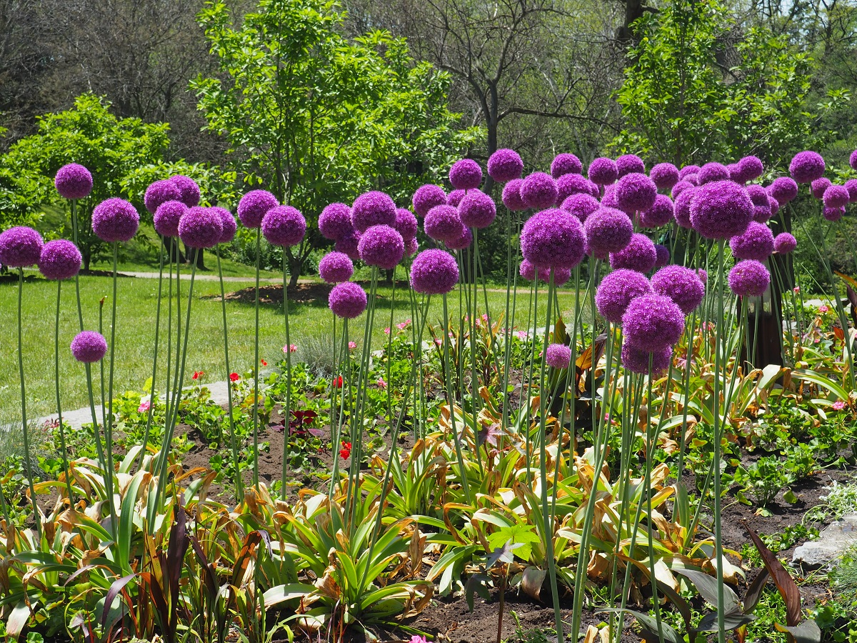 Flower bed, High Park, Toronto. June 24, 2021.
