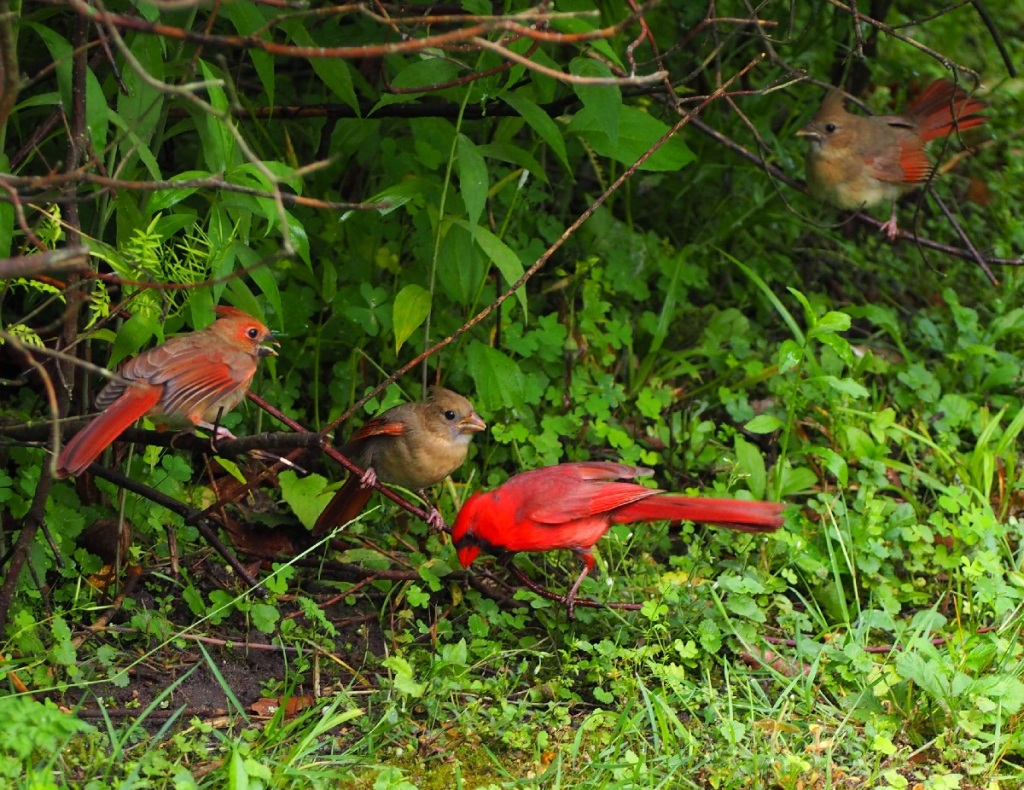 cardinal family edwards gardens toronto