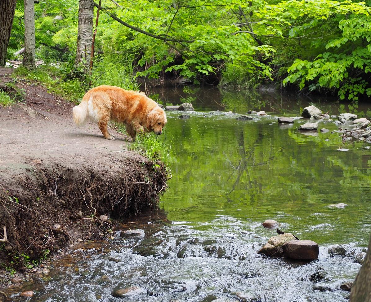 Dog at Edwards Gardens Toronto. Malik Merchant Simerg Photos