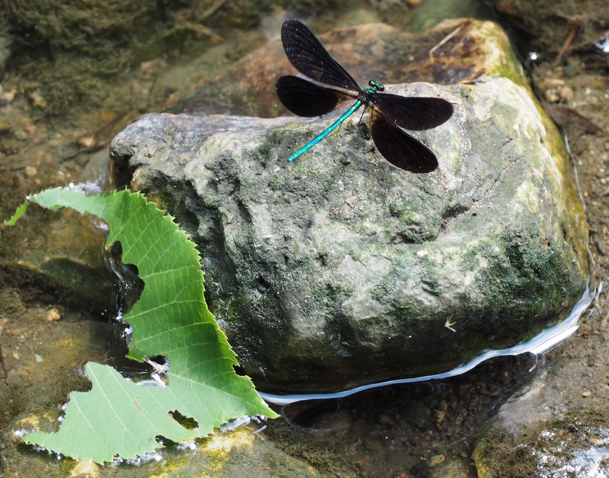 Dragon Fly Edwards Gardens Toronto Malik Merchant Simerg Photos